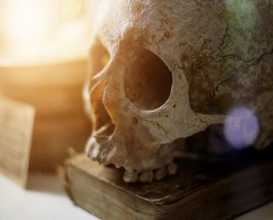 Free stock photo Skull and old book