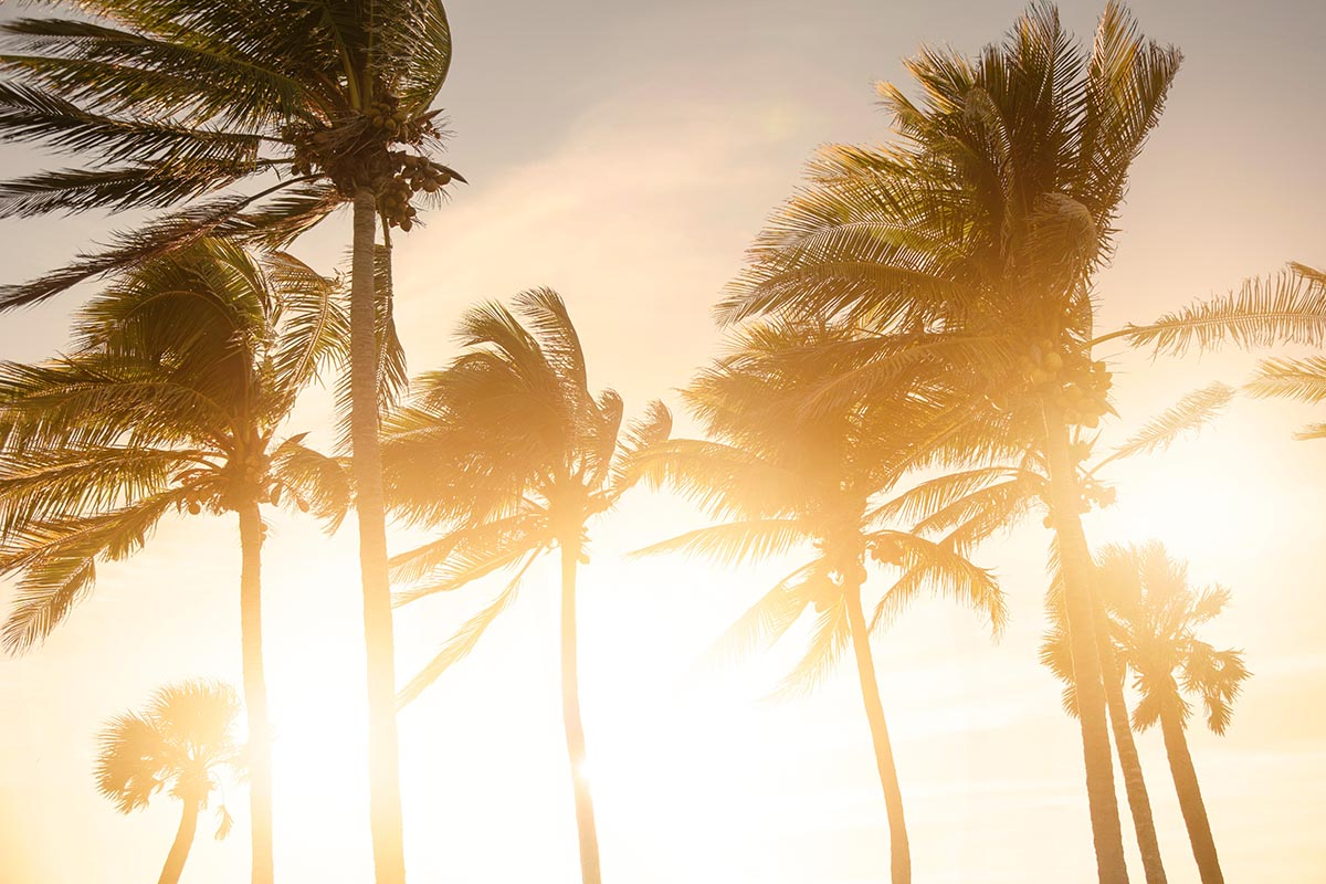 Free stock photo Palm trees blowing in the wind at sunset