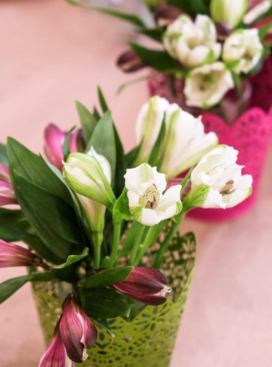 Free stock photo Decorative budding spring plants on a table
