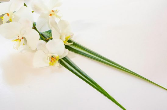 Free stock photo Background of white orchids and palm leaves on white