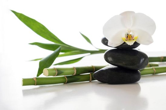 Free stock photo White orchid with spa stones and bamboo