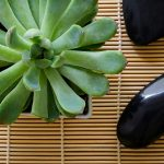Free stock photo Succulent plant and spa stones on a tan mat