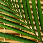 Free stock photo Palm leaf on a bamboo mat