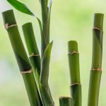 Free stock photo Close up of bamboo stalks against a green background