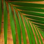 Free stock photo Palm leaf on a wood background
