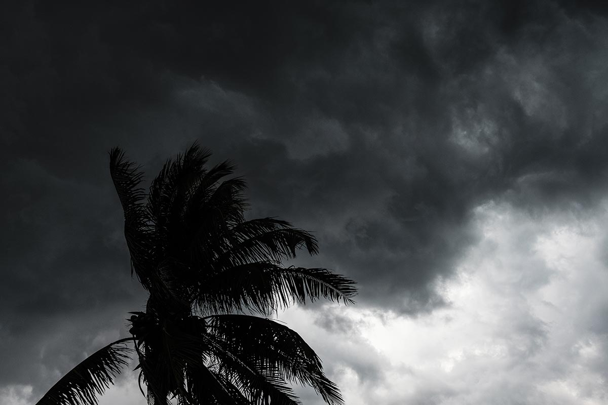 Free stock photo Blowing palm tree in a thunderstorm