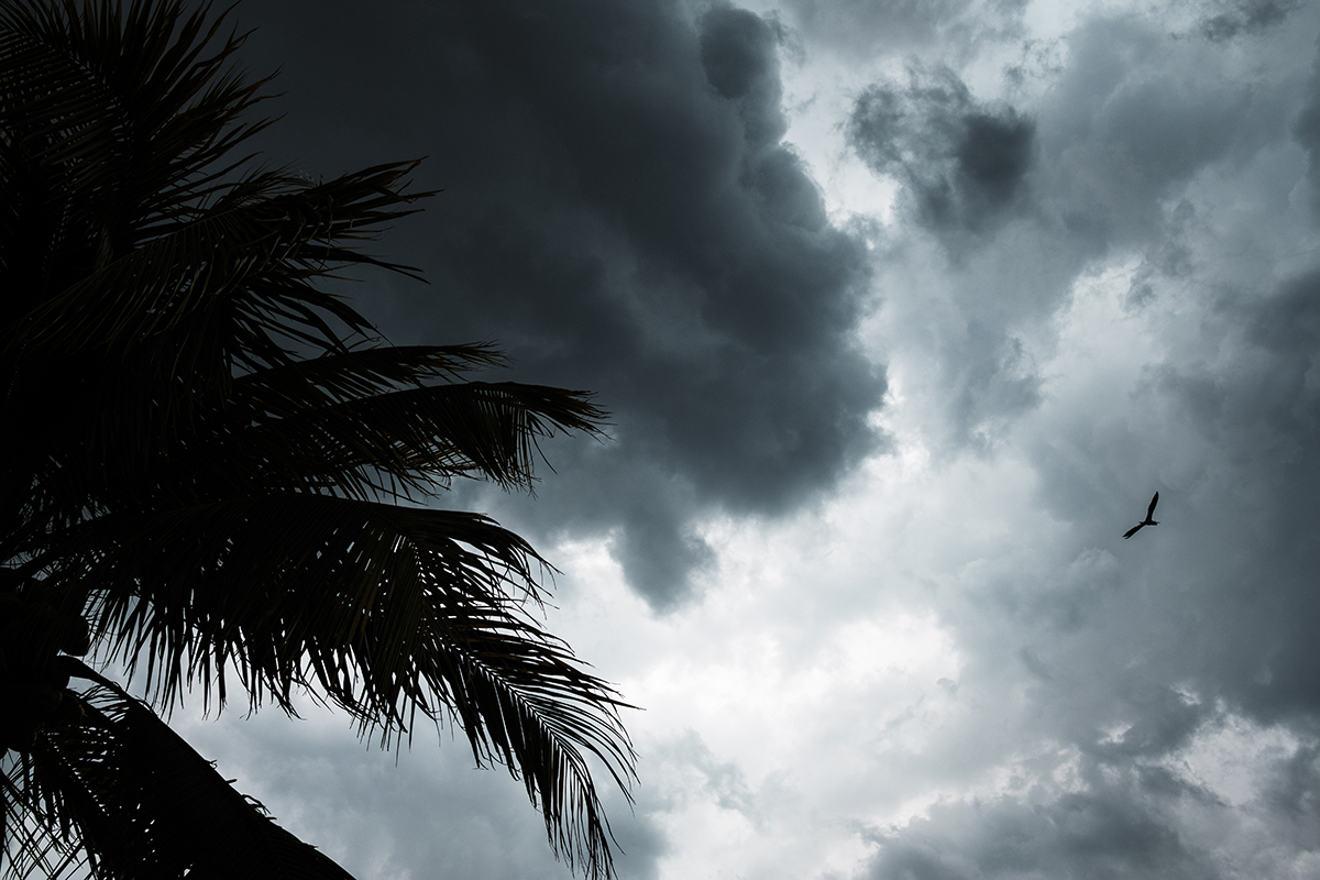 Free stock photo Palm tree and flying egret in a thunderstorm