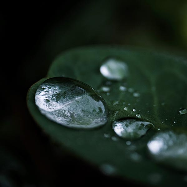 Free stock photo Drops of rain water on a leaf