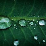 Free stock photo Line up of rain water drops on a green leaf