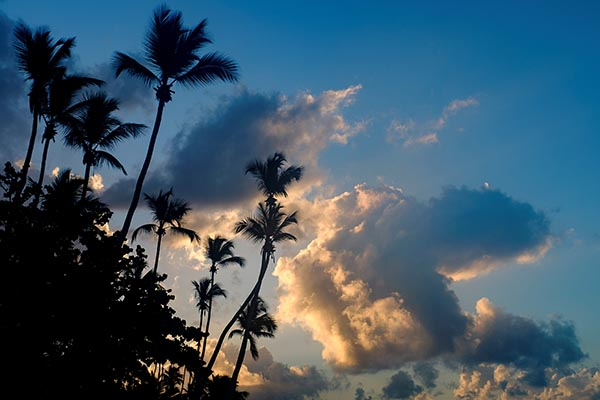 Free stock photo Palm trees silhouetted against a sunrise sky
