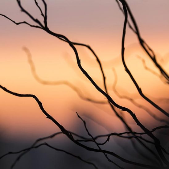 Free stock photo Silhouette of branches against a sunrise