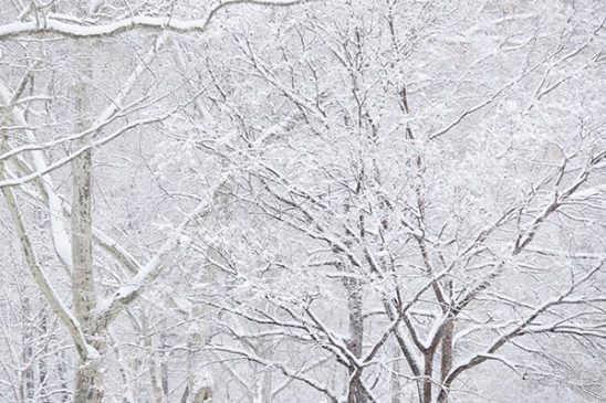 Free stock photo Winter trees covered in snow