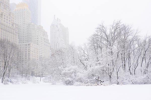Free stock photo Central Park pond covered in snow with building in the background
