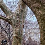 Free stock photo Late autumn trees in Washington Square Park, New York