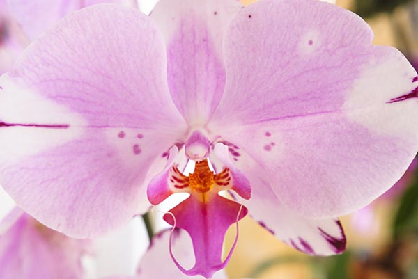 Free stock photo Full frame close up of a pink orchid