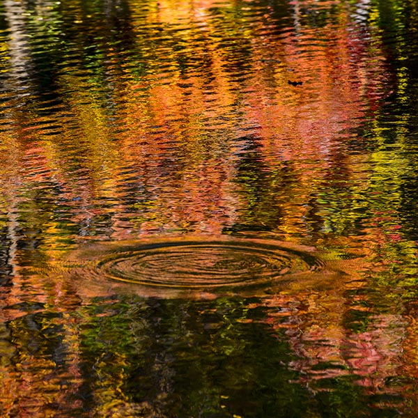 Free stock photo Ripples on a pond with reflections of autumn colors