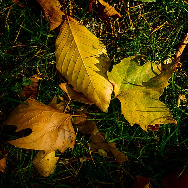 Free stock photo A group of colorful autumn leaves on the ground