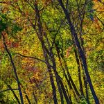 Free stock photo Panorama of colorful autumn forest trees