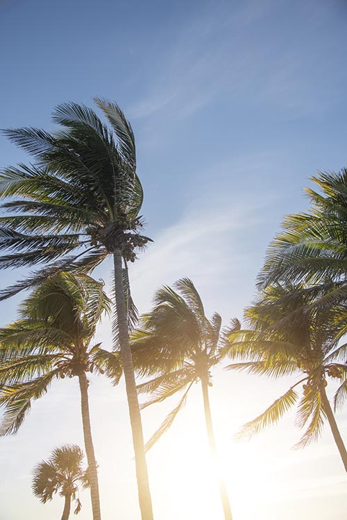 Free stock photo Palm trees with late day sun