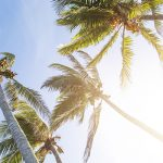 Free stock photo Coconut palm trees against a late day sun
