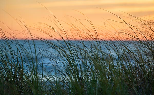 Free stock photo Sea grass by the ocean blowing in a breeze at sunset