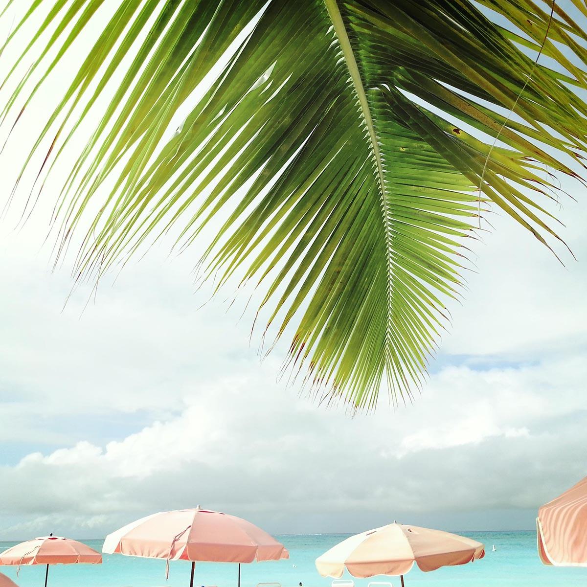 Free stock photo Palm leaf and beach umbrellas near the ocean