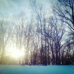 Free stock photo Sun shining through bare trees in a winter snow scene