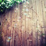 Free stock photo Bubbles rising into the air with a wood wall background