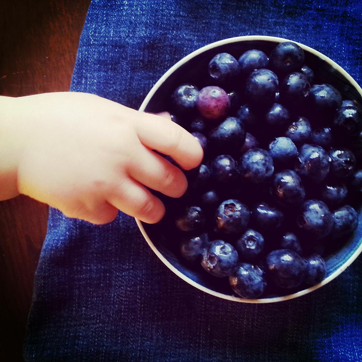 Free stock photo Child's hand reaching for blue berries in a bowl