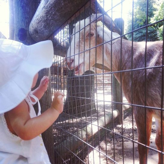 Free stock photo Toddler looking a goat in a children's zoo