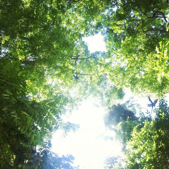 Free stock photo Opening to the sky through a covering of green trees