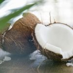 Free stock photo Coconut split in half with palm leaf