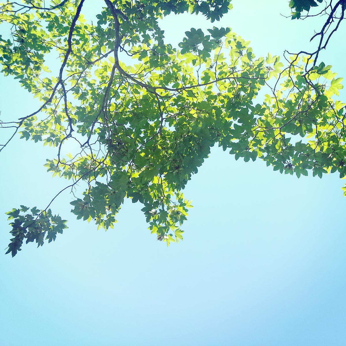 Free stock photo Border of green leaves against a blue sky