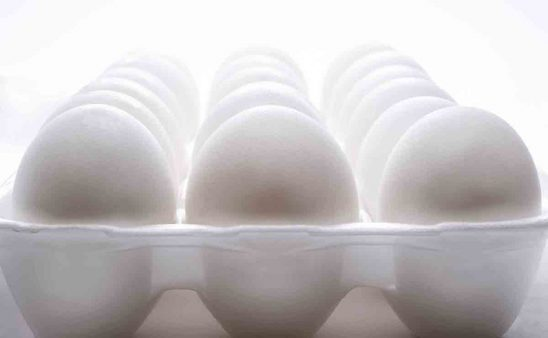 Free stock photo Close-up of eggs in tray over white background