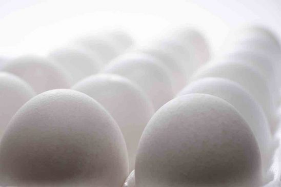Free stock photo Close-up of eggs over white background