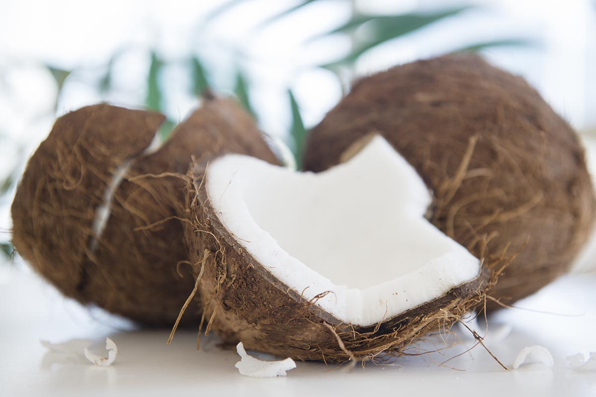 Free stock photo Split coconut with palm branches