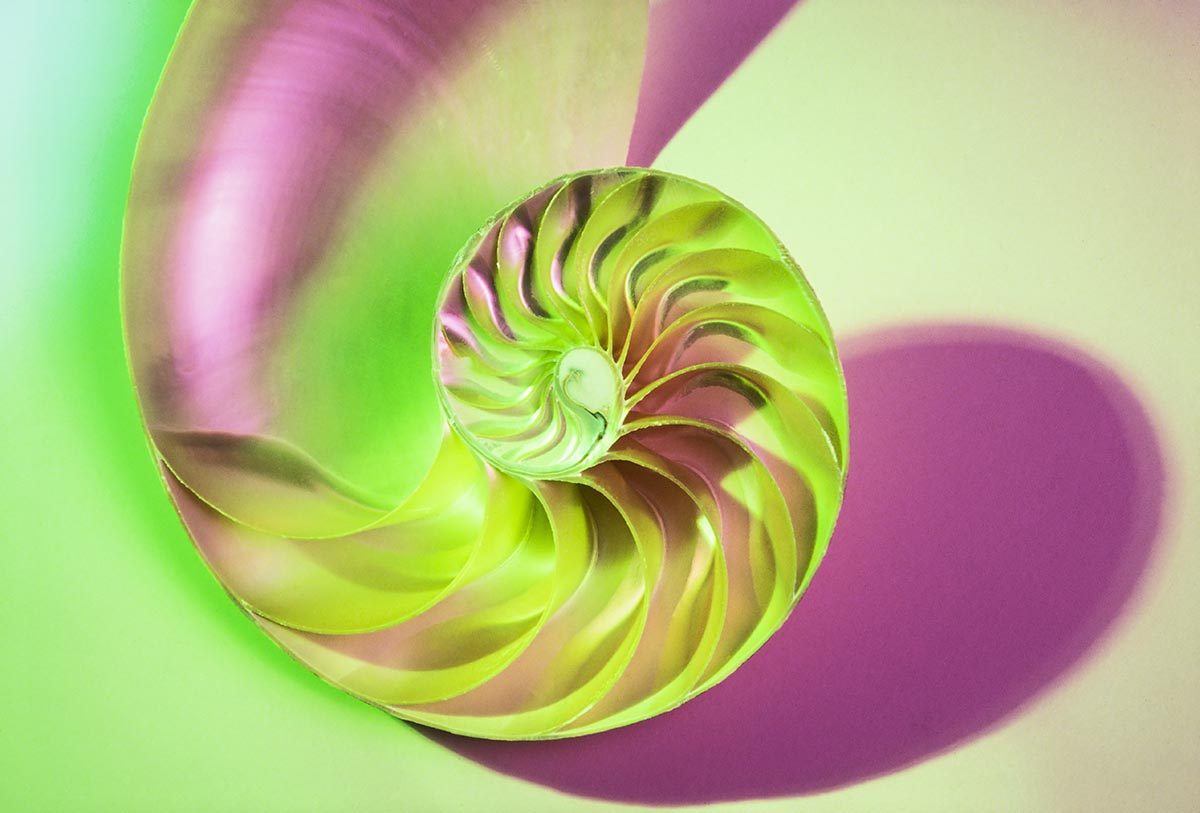 Free stock photo Cross section of a colorful nautilus shell
