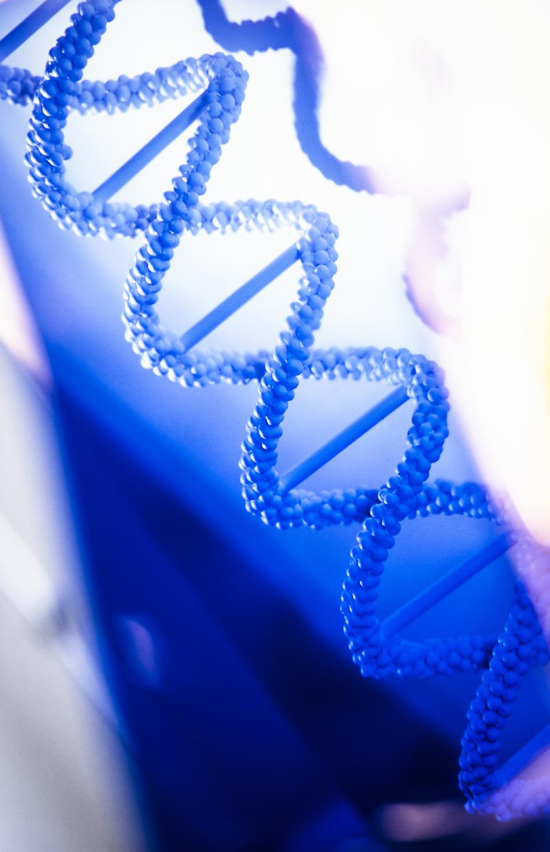 Free stock photo Model of a stand of DNA