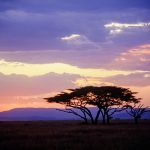 Free stock photo Serengeti sunset with Acacia trees