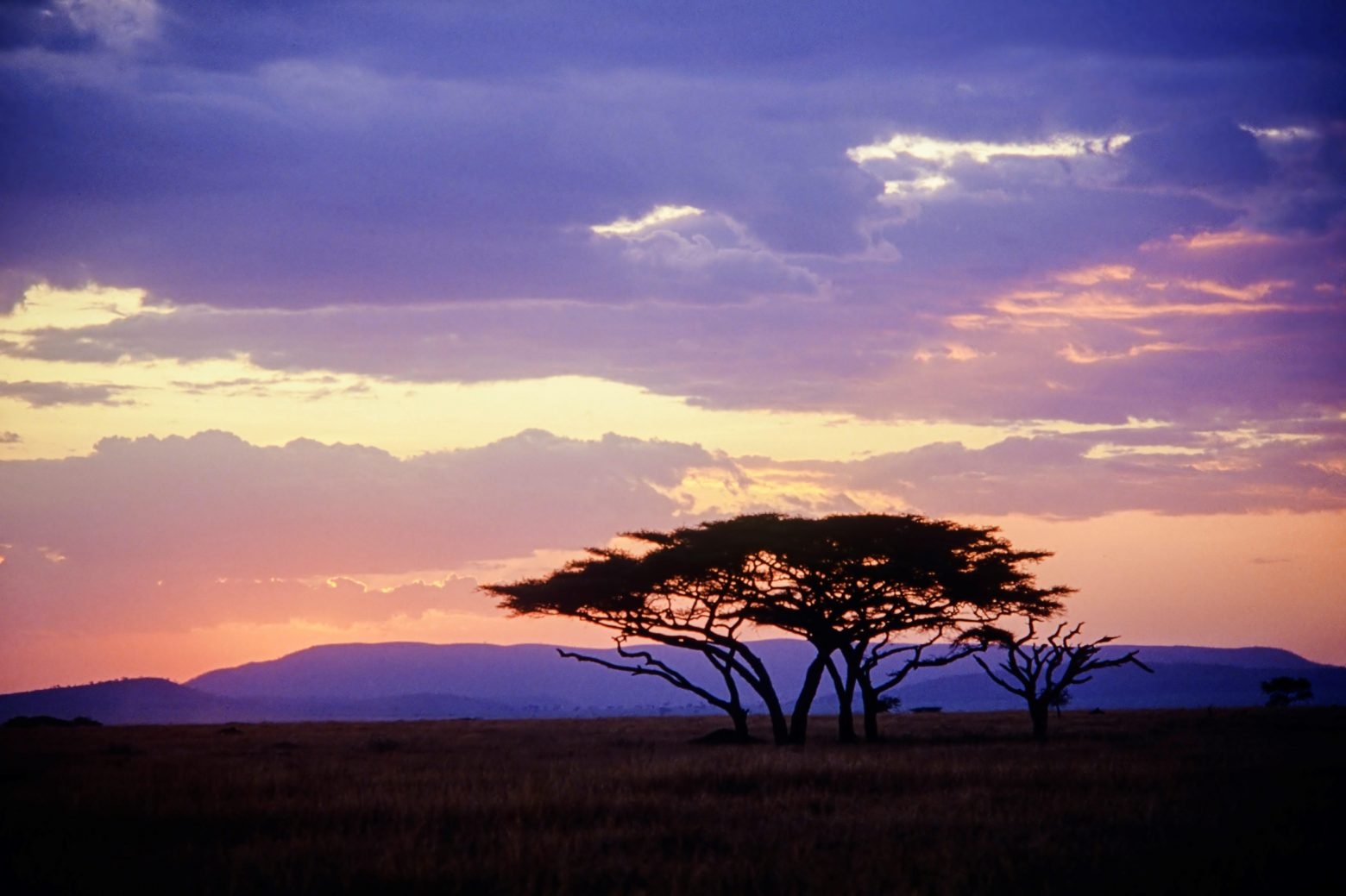 Free stock photo Serengeti sunset with Acacia trees
