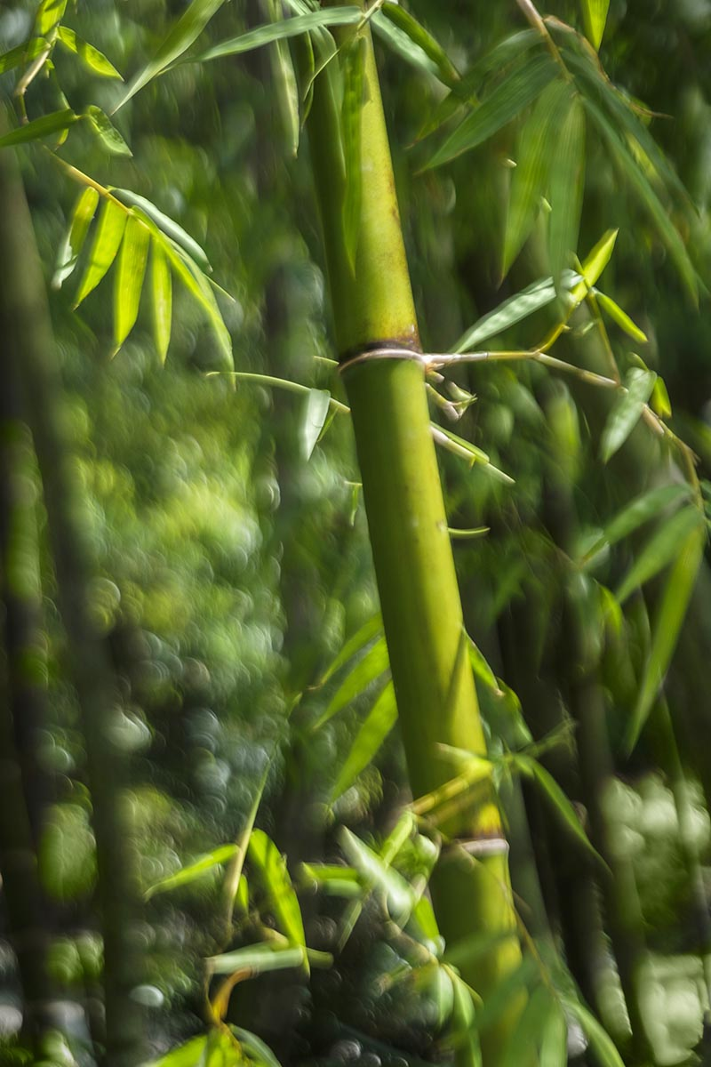 Free stock photo Bamboo garden background