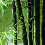 Free stock photo Background of bamboo stalks next to a pond