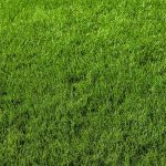 Free stock photo Full frame image of grass