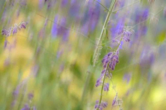 Free stock photo Defocused image of purple flowers in park