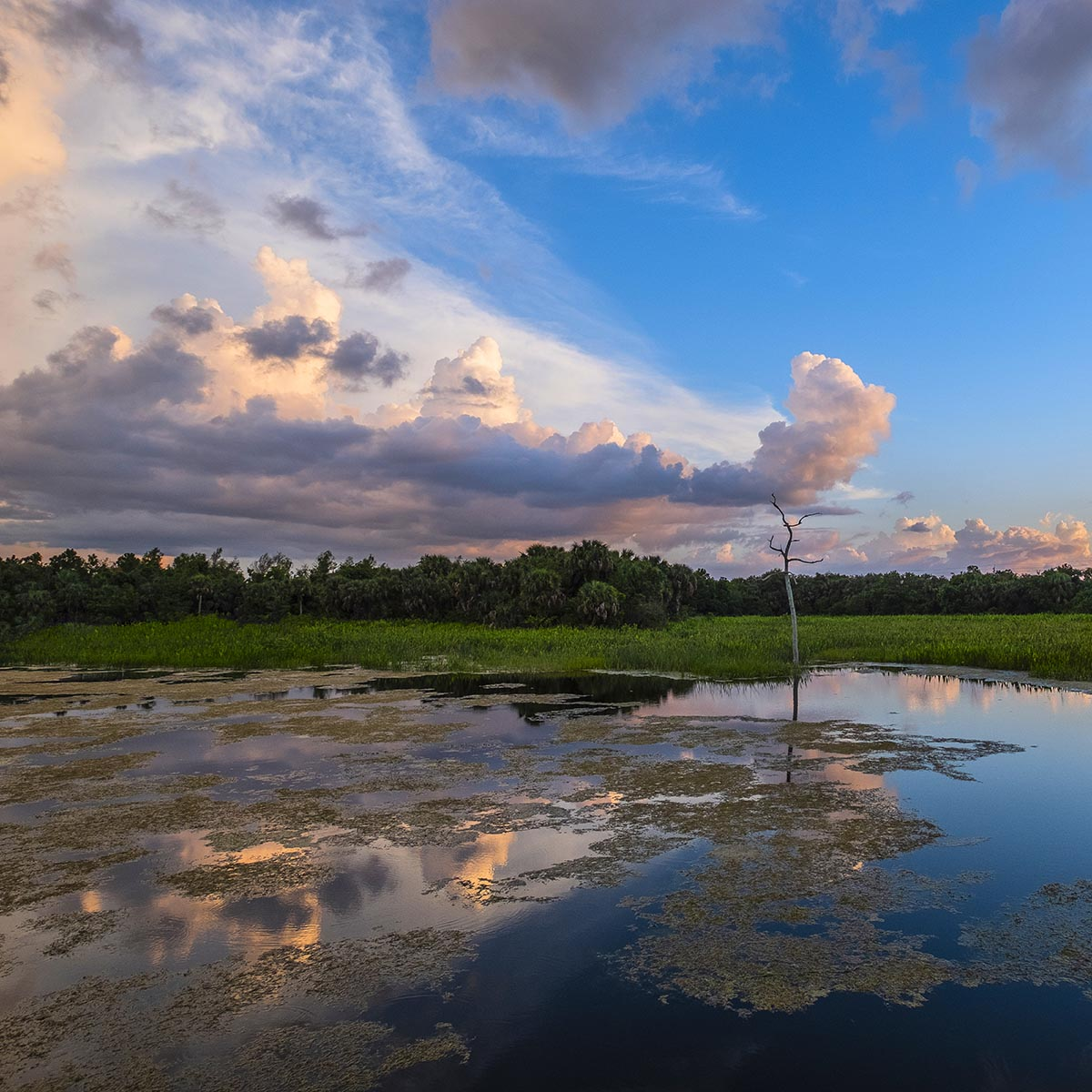 Free stock photo Dramatic sunset clouds form over the Green Cay Wetlands, Florida