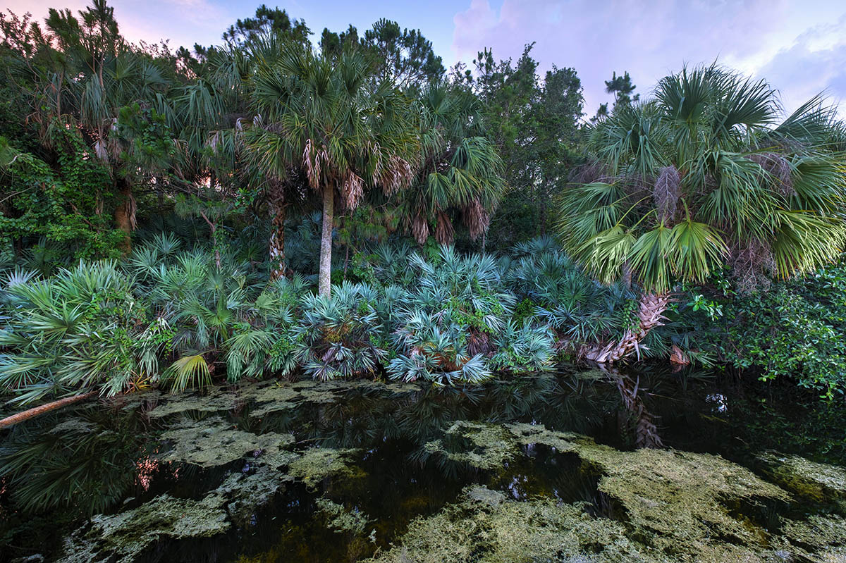 Free stock photo Dusk in the Green Cay Wetlands, Florida