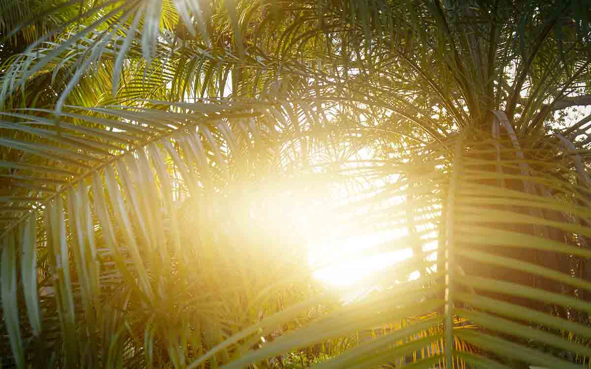 Free stock photo Sunlight streaming through palm leaves