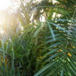 Free stock photo Close-up of fresh palm leaves