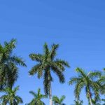 Free stock photo Low angle view of palm trees against blue sky