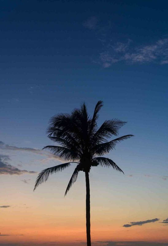 Free stock photo Low angle view of silhouette palm tree against sky